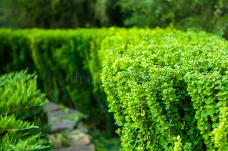 paysage de d?but de l'?t?, vieux parc, arbres, buissons, herbe verte, feuilles vert clair images libres de droits