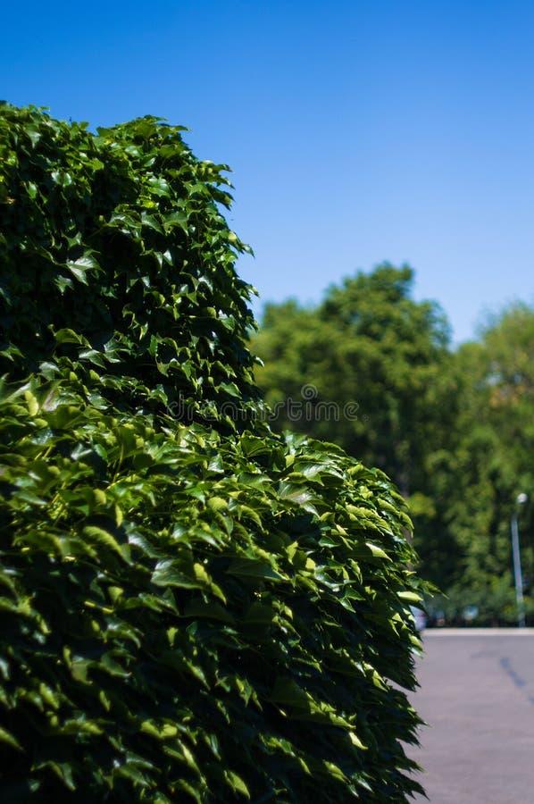 paysage de d?but de l'?t?, vieux parc, arbres, buissons, herbe verte, feuilles vert clair photos stock