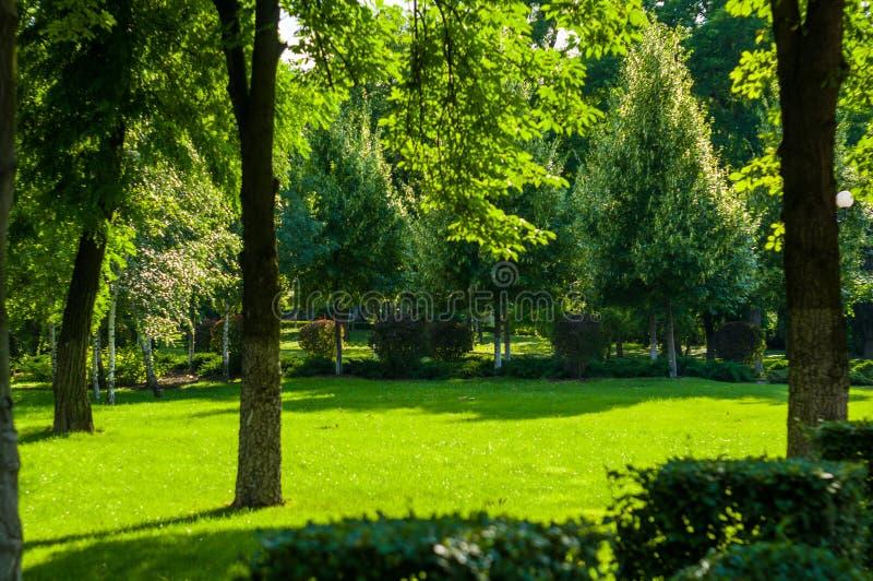 paysage de d?but de l'?t?, vieux parc, arbres, buissons, herbe verte, feuilles vert clair image libre de droits
