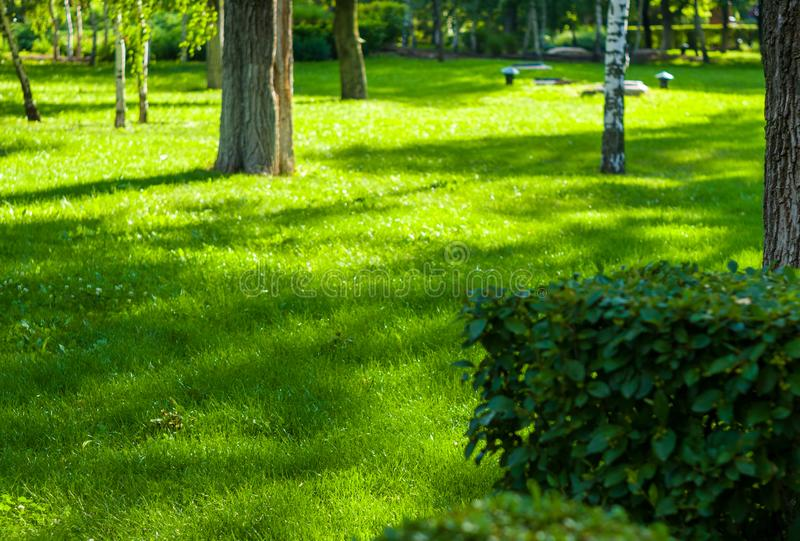 paysage de d?but de l'?t?, vieux parc, arbres, buissons, herbe verte, feuilles vert clair images stock