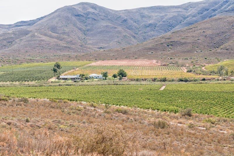 Paysage de ferme près de Bonnievale photographie stock