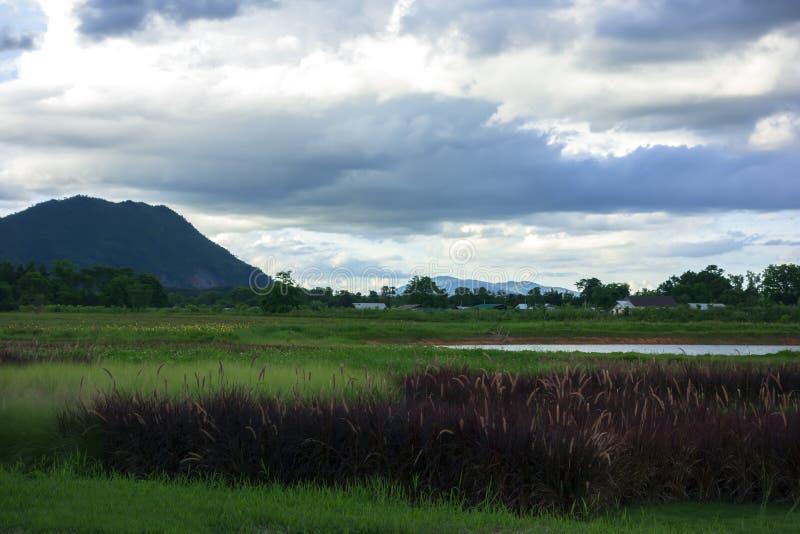 Paysage de fines herbes vert près de rivière de Mekok images stock