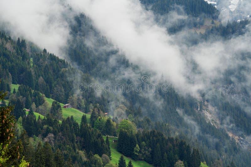 Paysage de forêt avec l'environnement brumeux sur la montagne avec une maison en été dans Lauterbrunnen, Suisse photo libre de droits