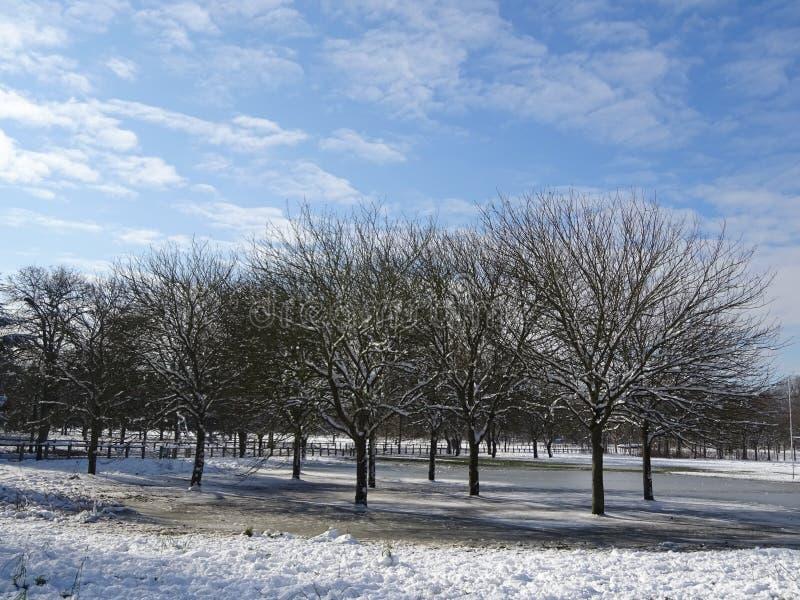 Paysage de forêt avec la neige d'hiver et les cieux bleus image libre de droits