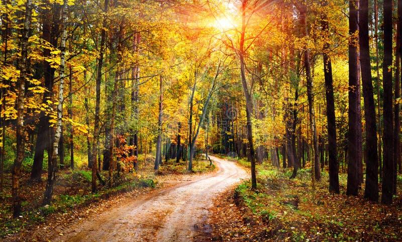 Paysage de forêt d'automne le jour lumineux ensoleillé Rayons de soleil vifs par des arbres en nature colorée de forêt à l'automn images libres de droits