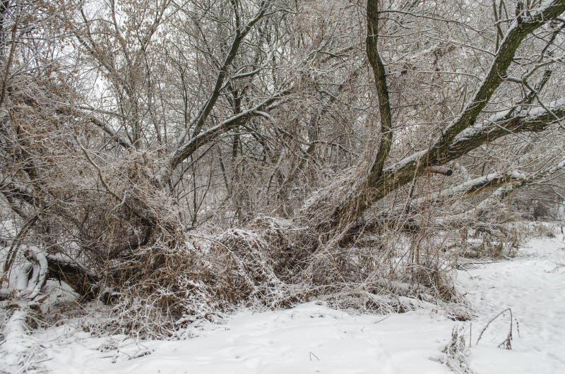 Paysage de forêt d'hiver images stock
