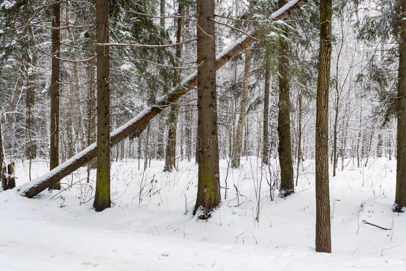 Paysage de forêt d'hiver avec l'arbre tombé dans le premier plan photographie stock