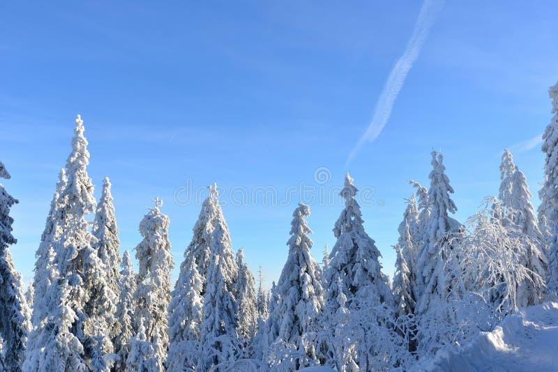 Paysage de forêt d'hiver avec la neige photos stock