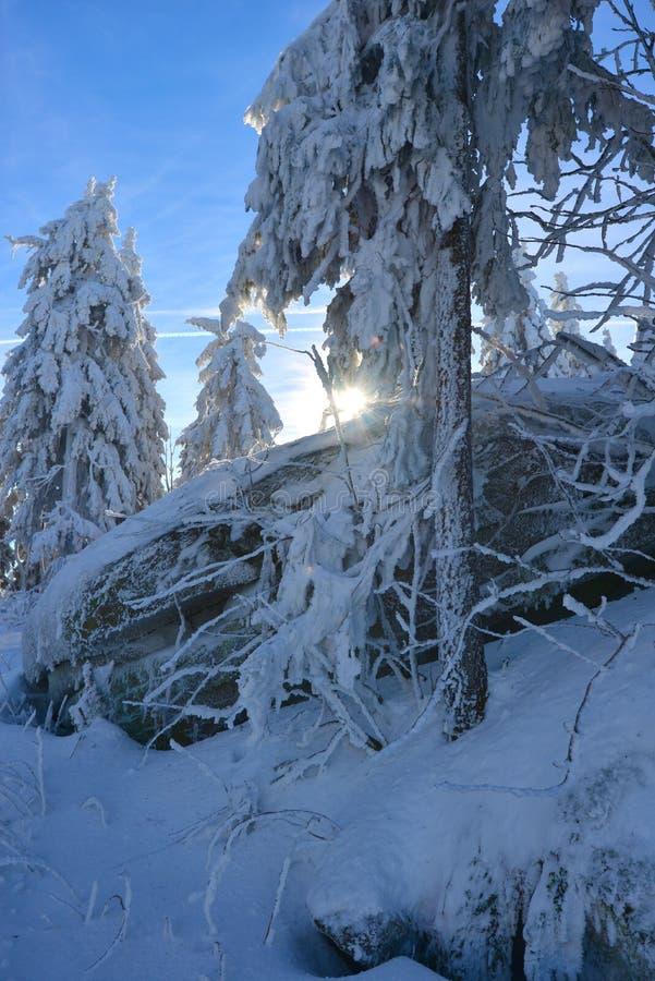 Paysage de forêt d'hiver avec la neige photographie stock libre de droits