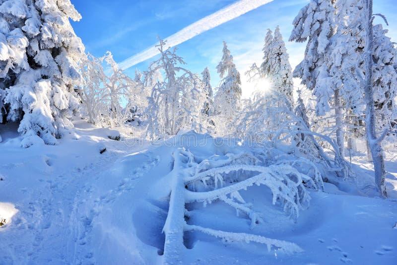 Paysage de forêt d'hiver avec la neige photo stock