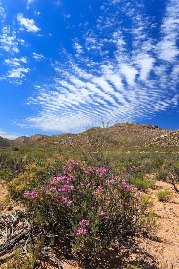 Paysage de forêt de la savane et ciel bleu à Cape Town photos libres de droits
