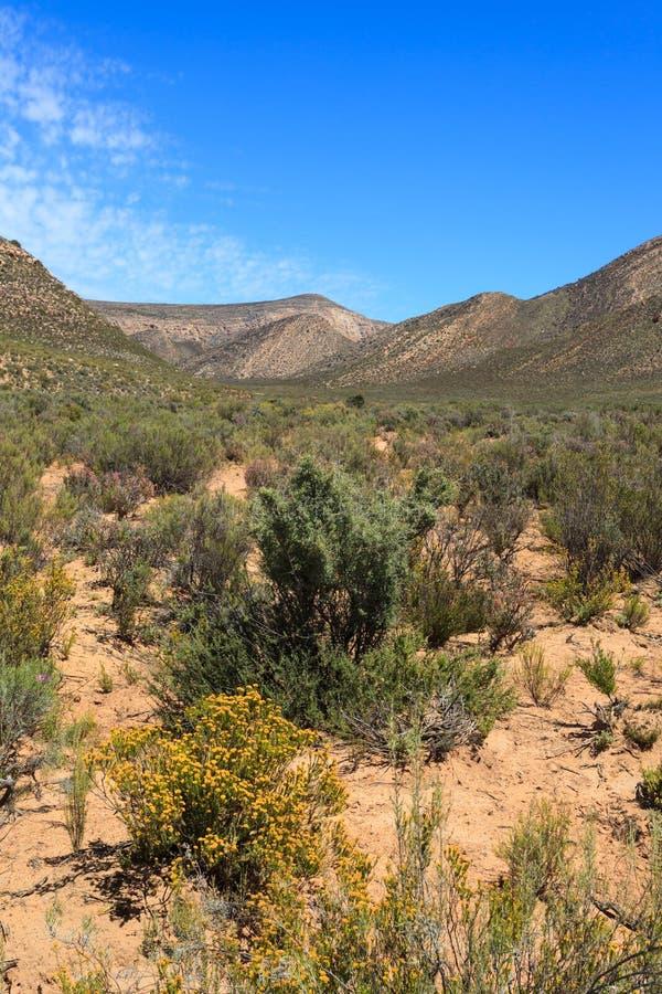Paysage de forêt de la savane et ciel bleu en Afrique du Sud images stock