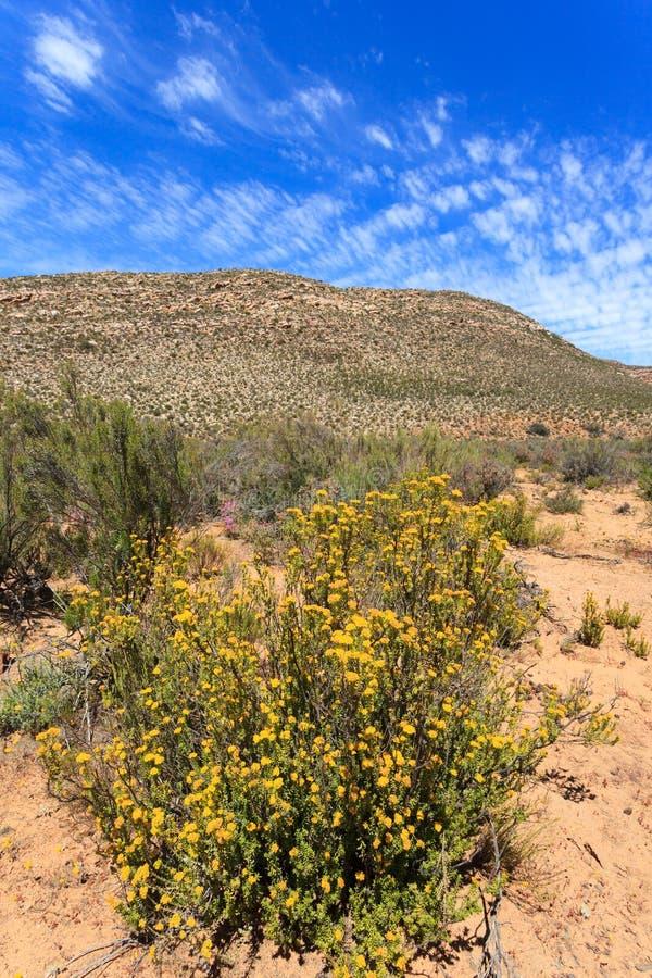 Paysage de forêt de la savane et ciel bleu en Afrique du Sud images libres de droits