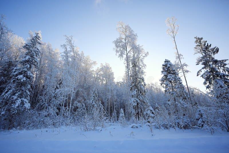 Paysage de forêt de sapin photographie stock