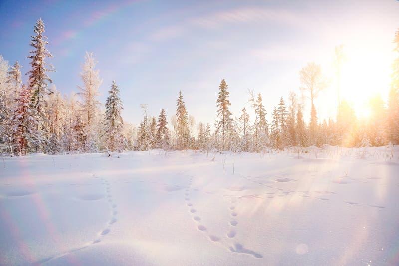 Paysage de forêt de sapin photos libres de droits