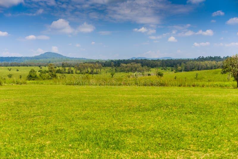 Paysage de forêt et de montagne de la savane avec un ciel bleu et un whi photos libres de droits