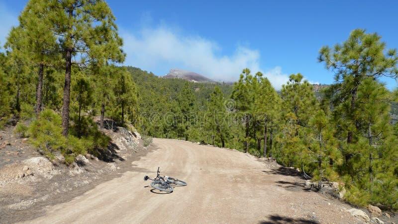 Paysage de forêt de nuages et de montagne de stupéfaction Pins le long de route de campagne avec le bycicle du photografer Ciel b images stock