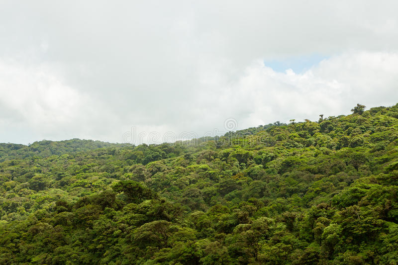 Download Paysage De Forêt Tropicale En Monteverde Costa Rica Image stock - Image du costa, nuage: 87700801