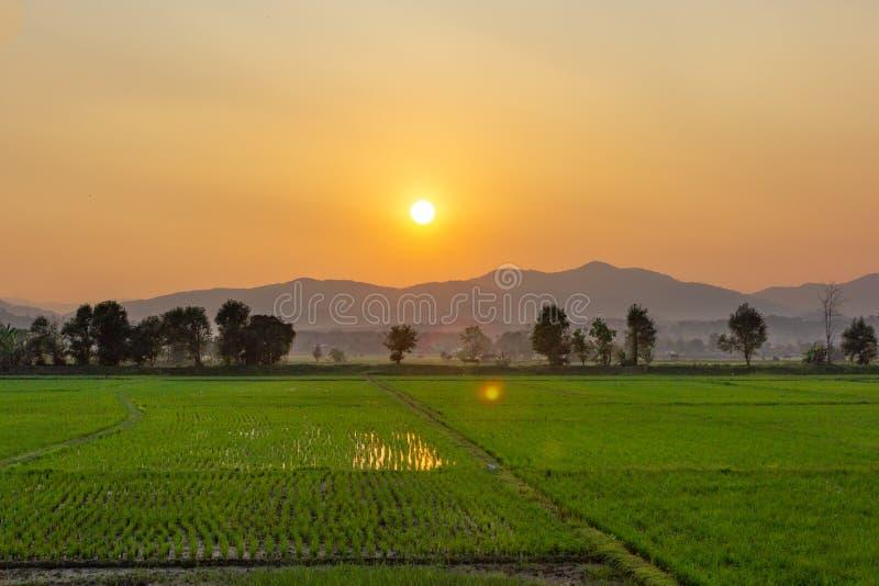 Paysage de gisement vert de riz avec la montagne sur le fond dans le coucher du soleil image libre de droits
