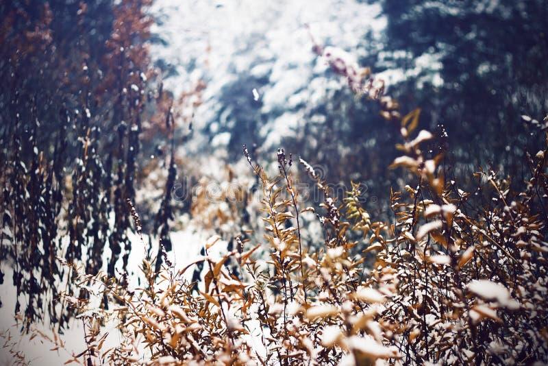 paysage de Hiver-automne avec les buissons défraîchis dans la forêt photographie stock libre de droits
