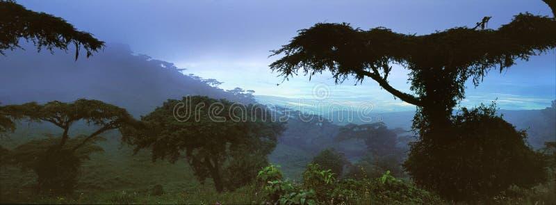 Paysage de jungle au Gabon images libres de droits