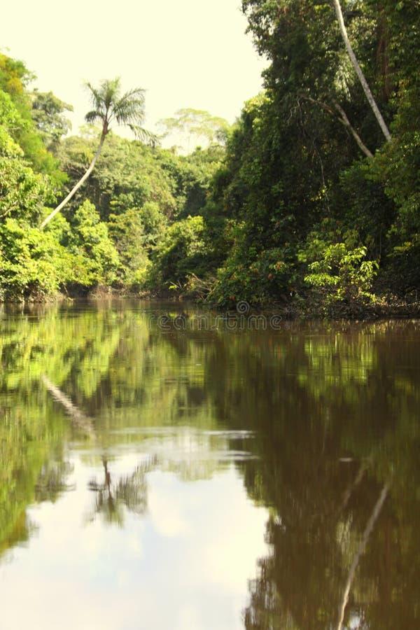 Paysage de jungle de rivière de forêt tropicale images stock