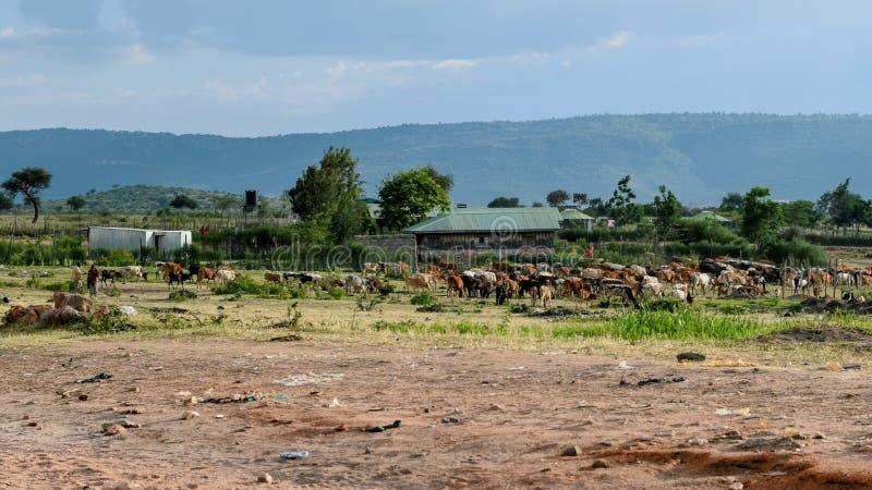 Paysage de l'Afrique dans la ville de Narok, Kenya images libres de droits