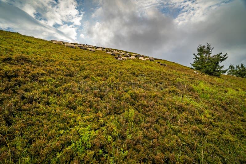 Paysage de l'arête de Borzhava des montagnes carpathiennes ukrainiennes Nuages au-dessus de Carpathiens photographie stock libre de droits