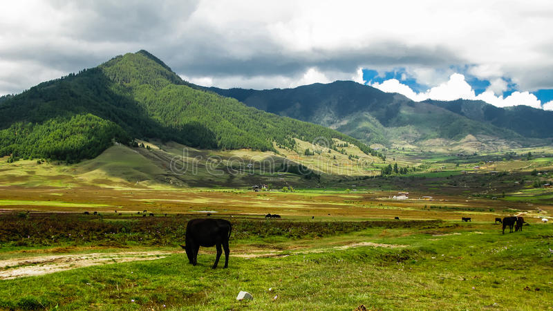 Paysage de l'Himalaya de vallée de Phobjikha de montagne, Bhutan photo stock