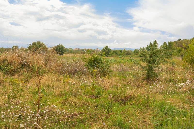 Paysage de la campagne, champ couvert de mauvaises herbes et d'arbustes images stock