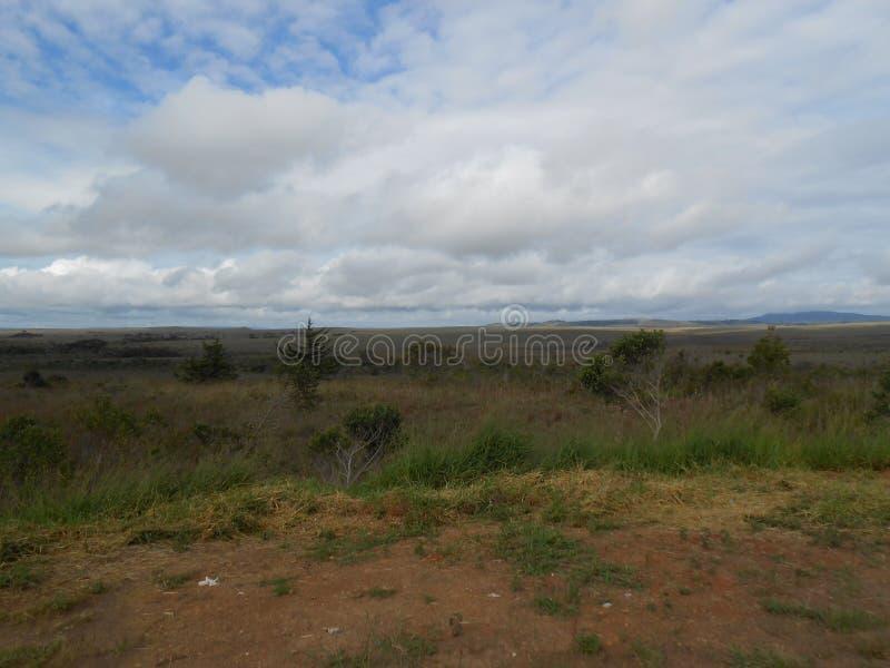 Paysage de la savane situé dans les sud du Venezuela dans mamie Sabana Amazonas de La image stock