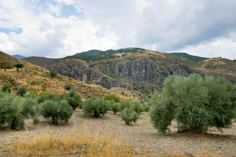 Paysage de la Sierra Nevada image stock