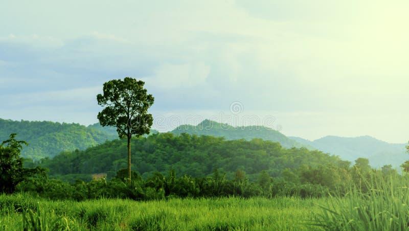 Paysage de la verdure de la nature locale de la Thaïlande avec des vues des montagnes et des prairies au matin image stock
