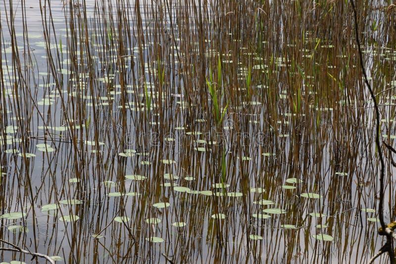 Paysage de lac image stock