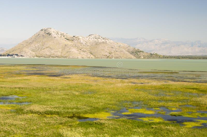 Paysage de lac Skadar, Monténégro image libre de droits
