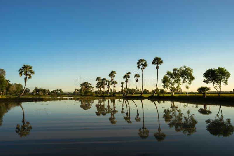 Paysage de lever de soleil avec des palmiers de sucre sur la rizière dans le matin Delta du Mékong, Doc. de Chau, An Giang, Vietn images stock