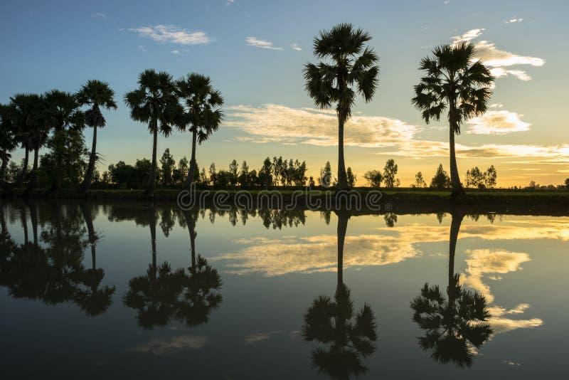 Paysage de lever de soleil avec des palmiers de sucre sur la rizière dans le matin Delta du Mékong, Doc. de Chau, An Giang, Vietn photographie stock libre de droits