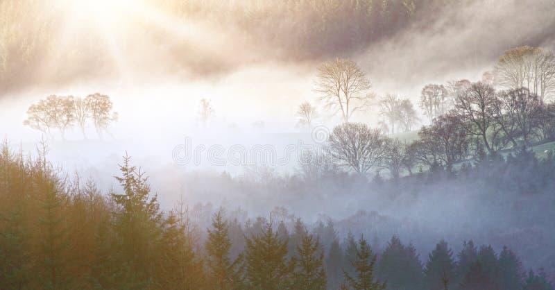 Paysage de matin photo libre de droits