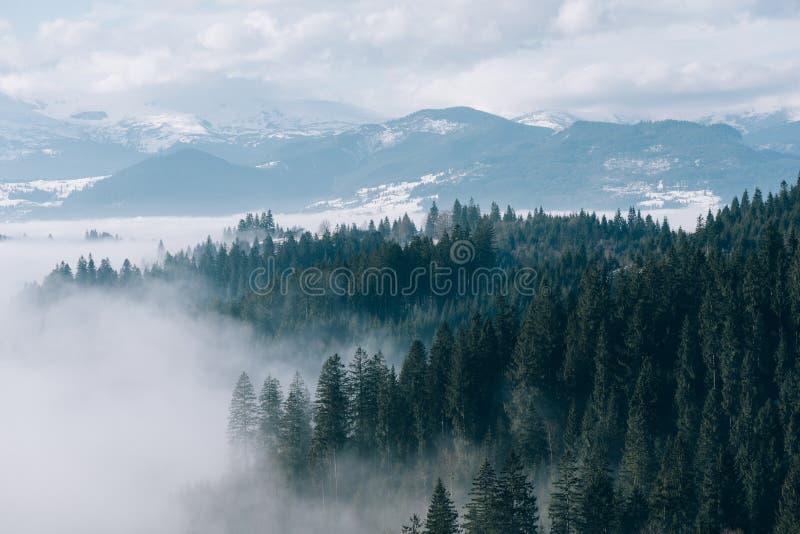 Paysage de montagne avec la forêt et le brouillard de sapin image libre de droits