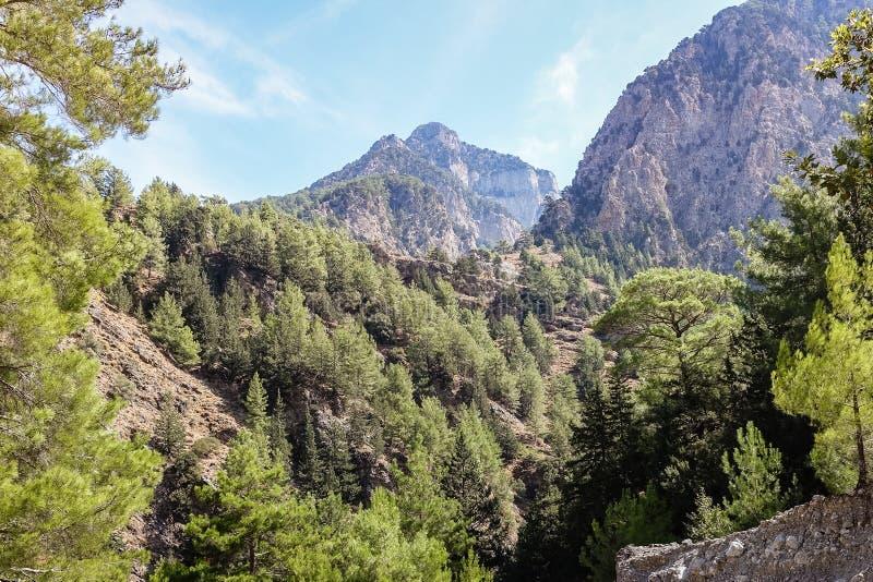 Paysage de montagne avec la forêt de pin et le ciel bleu photo stock