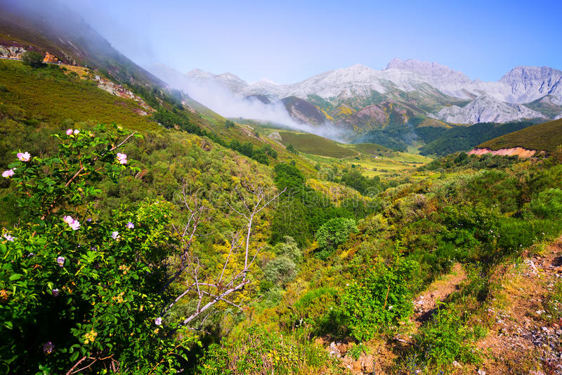 Paysage de montagne avec le brouillard en été image stock