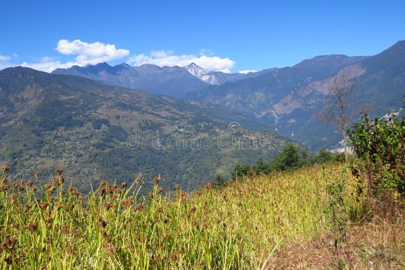 Paysage de montagne avec le gisement de millet sur le premier plan, Népal photos libres de droits