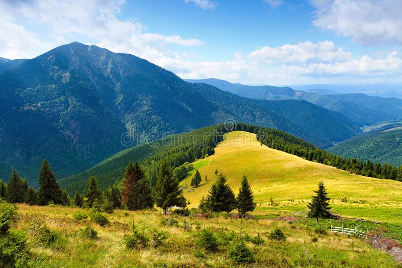 Paysage de montagne avec le pré entre les arbres photographie stock