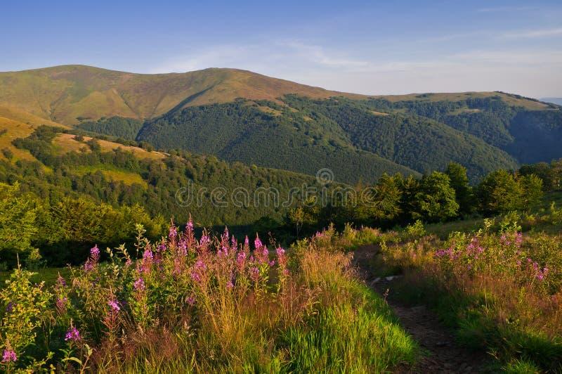 Paysage de montagne d'été avec les fleurs roses dans le premier plan photos stock