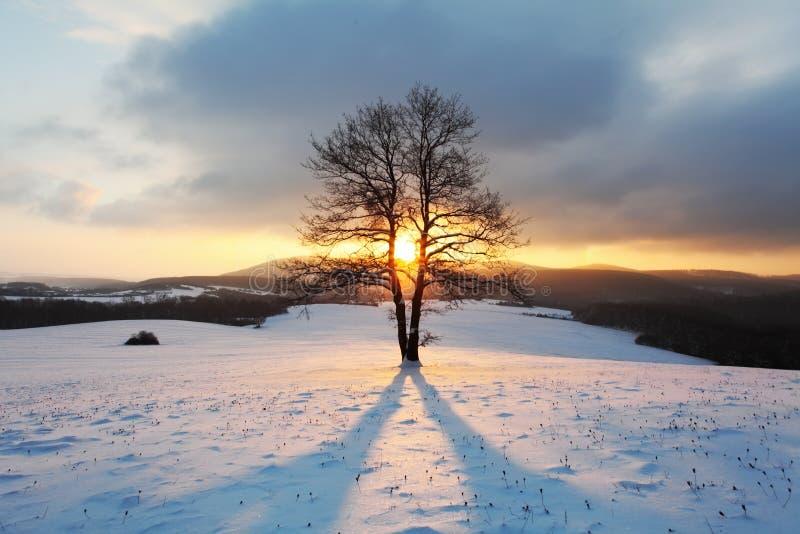 Paysage de montagne d 39 hiver avec l 39 arbre au coucher du soleil image stock image 34398145 - Photo coucher de soleil montagne ...