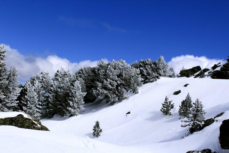 Paysage de montagne d'hiver avec les arbres coniféres couverts par des flocons de neige Brillez le ciel bleu et nuageux photos libres de droits