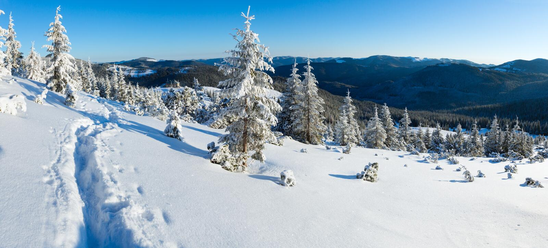 Paysage de montagne d'hiver de matin (carpathien, Ukraine) photos libres de droits