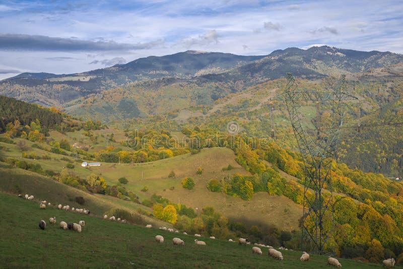 Paysage de montagne - mouton frôlant dans les montagnes image libre de droits