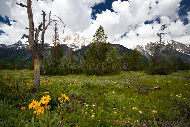 Paysage de montagne de Yellowstone photographie stock libre de droits
