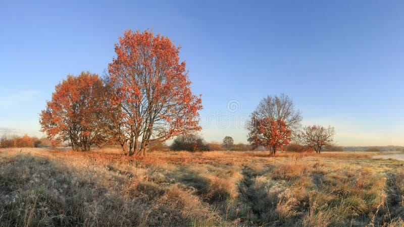 Paysage de nature d'automne le temps clair ensoleillé Arbres colorés avec le feuillage rouge sur le pré avec l'herbe jaune Automn photo libre de droits